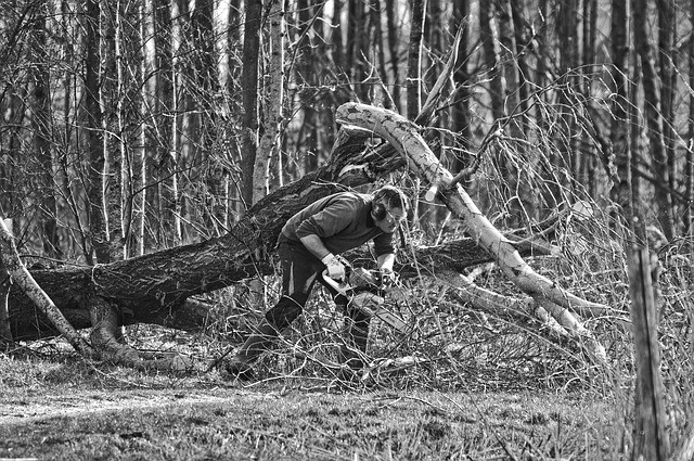 Man trying to cut a tree